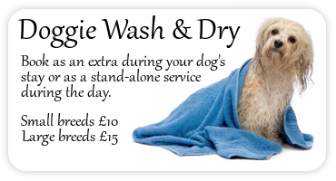 dog wash and dry display